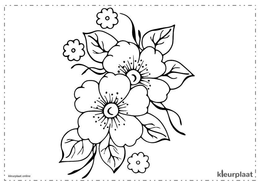 Bloemen Wilde bloemen