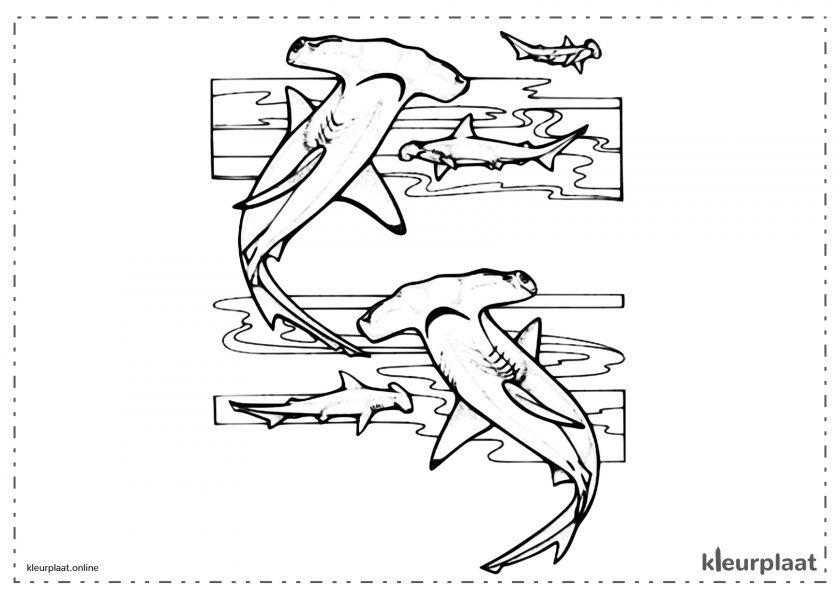 Hamerhaaien