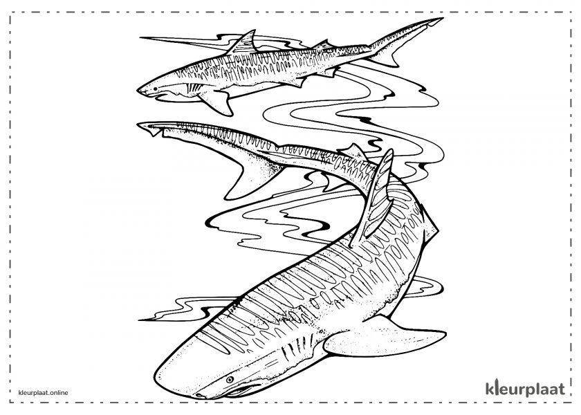 Haaien zwemmen